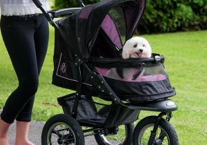 dog-strollers-cheap