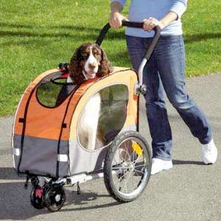 Best Dog Breed For Dissabled Wheelchair
